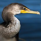 Cormorant Close Up by TJ Baccari Photography