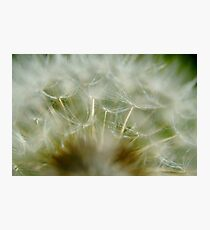 Dandelion Close Up Photographic Print