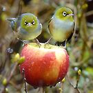 Who'll Stop the Rain From Falling Down On Us? - Silvereyes-NZ by AndreaEL