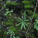Wild Garden by finnomanon