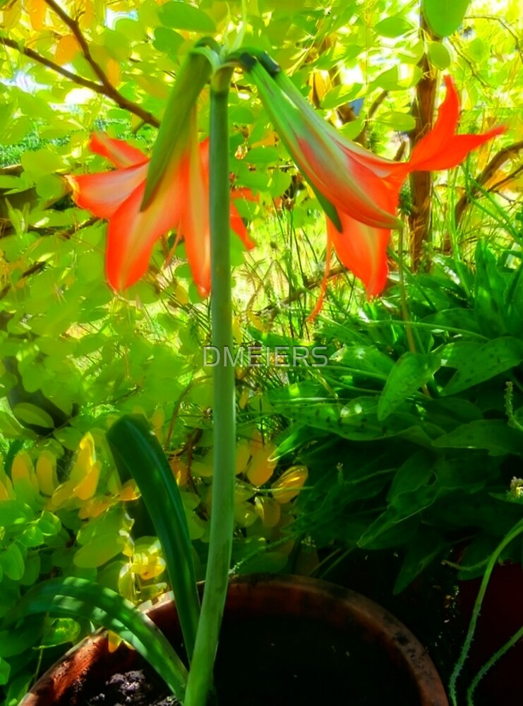 GARDENING LILLY by DMEIERS