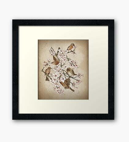 Too many birds Framed Print
