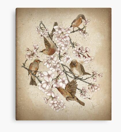 Too many birds Canvas Print