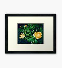 bright yellow roses 05/22/17 Framed Print