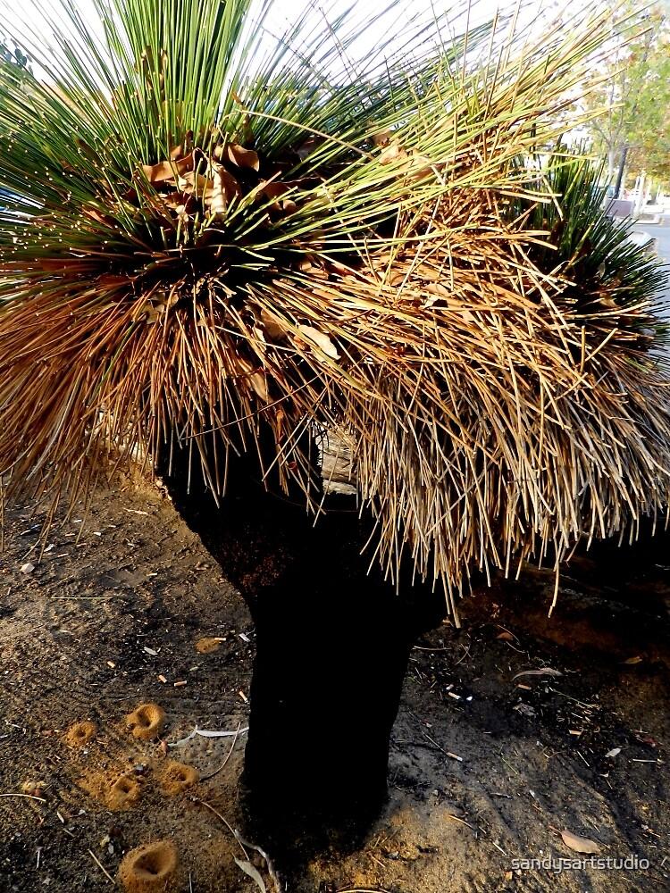 Grass Tree Joondulup, Western Australia. by sandysartstudio
