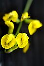 Canary yellow by missmoneypenny