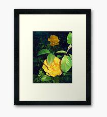 shy yellow roses 05/22/17 Framed Print