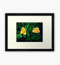 two cute yellow roses 05/22/17 Framed Print
