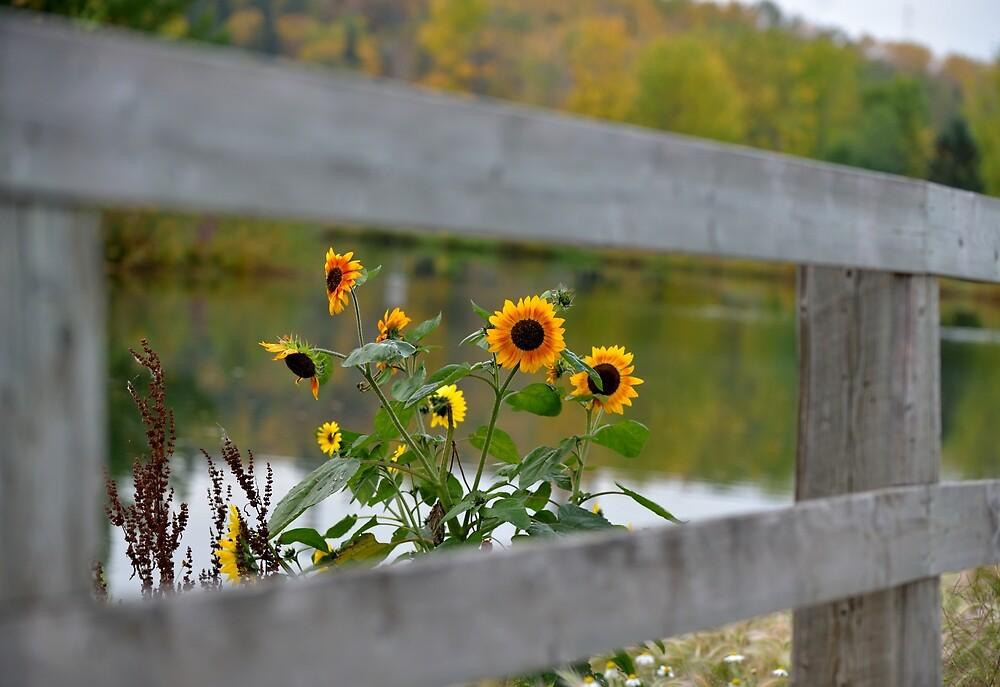 All fenced in by PhotosbySylvia