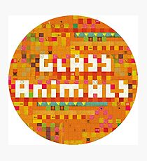 Glass Animals Photographic Print