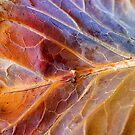 Winter Leaf by David Lamb