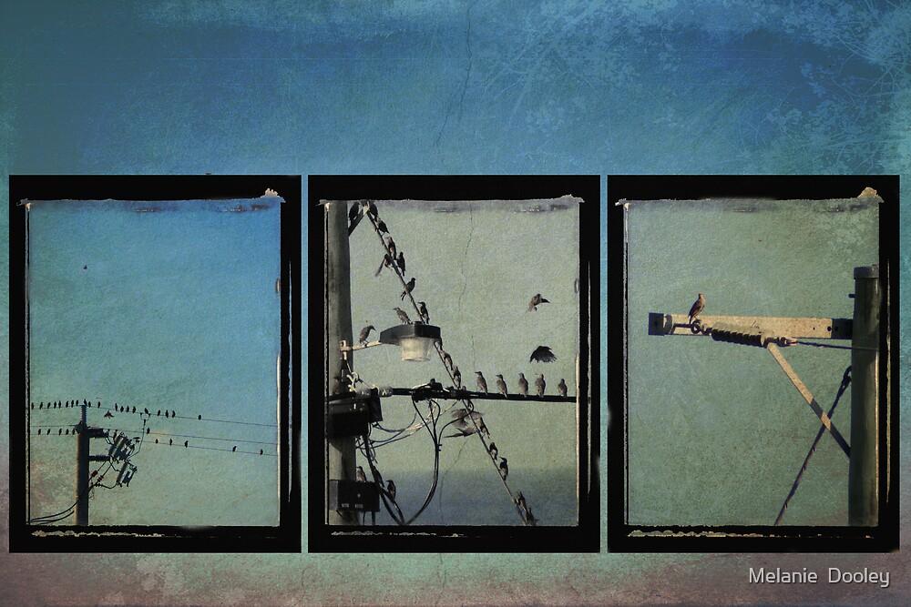 Three Birds by Melanie  Dooley