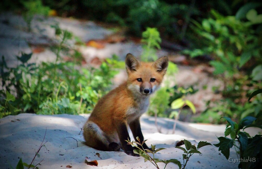Red Fox Kit by Cynthia48