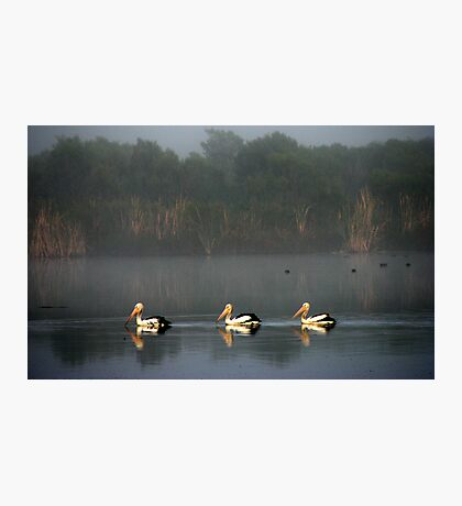 3 On A Misty Morn  Photographic Print