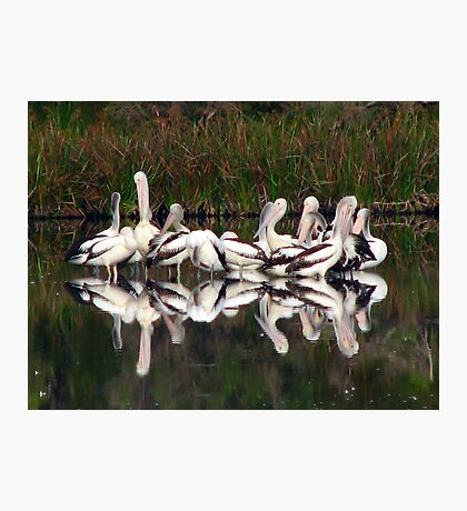 Pelican Brief 2 Photographic Print