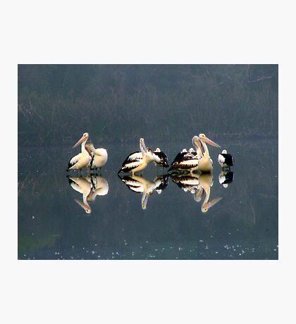 Pelican Brief 1 Photographic Print