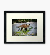 Adorable Fox Cub Framed Print