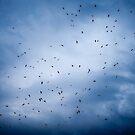 Birds by Marcel Ilie
