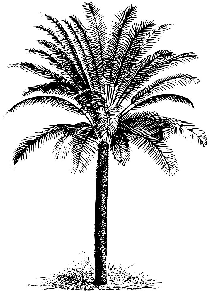 Cycad by seriouscereal