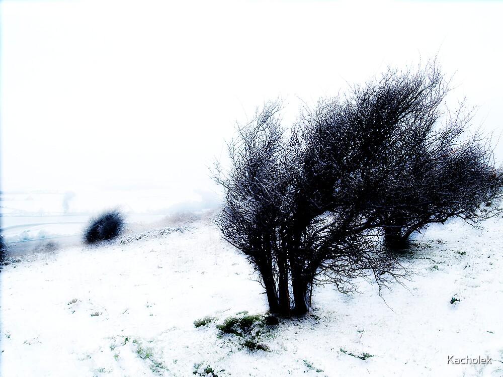 Winter by Kacholek