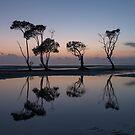 My Dancing Trees - Beachmere by Barbara Burkhardt