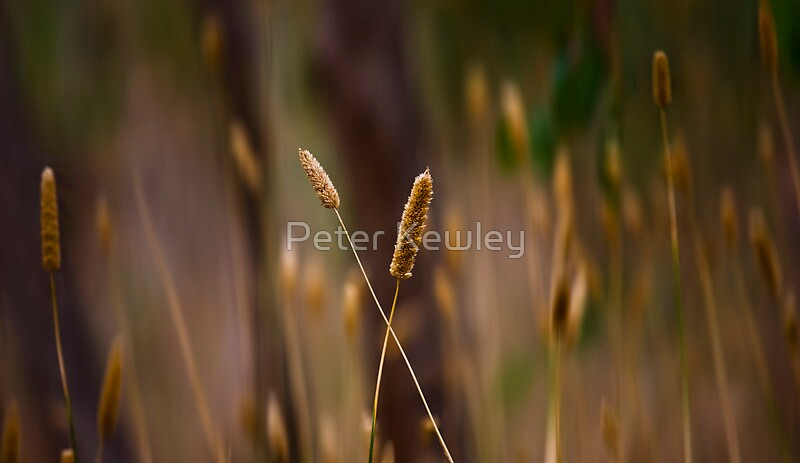 Wind in the Grasses by Peter Kewley