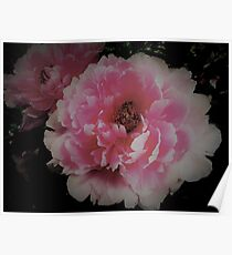 peony ,House of Harlequin Poster
