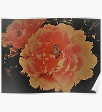 peony, House of Harlequin Poster