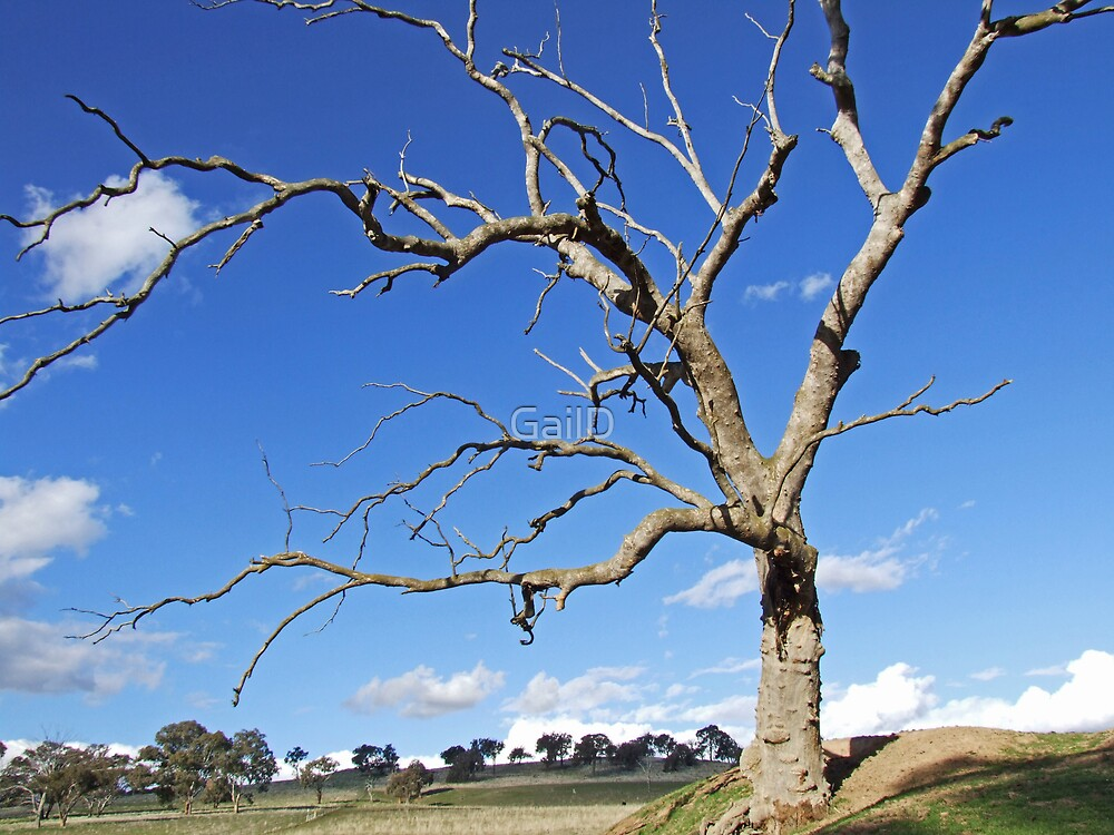 Lone Tree by GailD