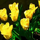 Yellow tulips our garden by Shulie1