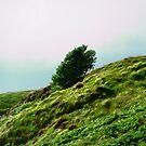 Windblown Tree, Donegal, Ireland by Shulie1