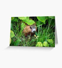 Cute Shy Peek a Boo Baby Groundhog  Greeting Card