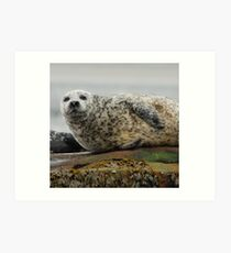 Common Seal at Rest Art Print