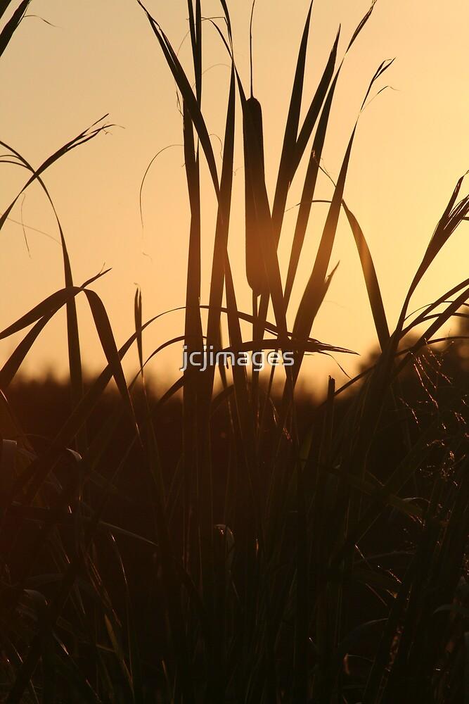 Reeds  by jcjimages