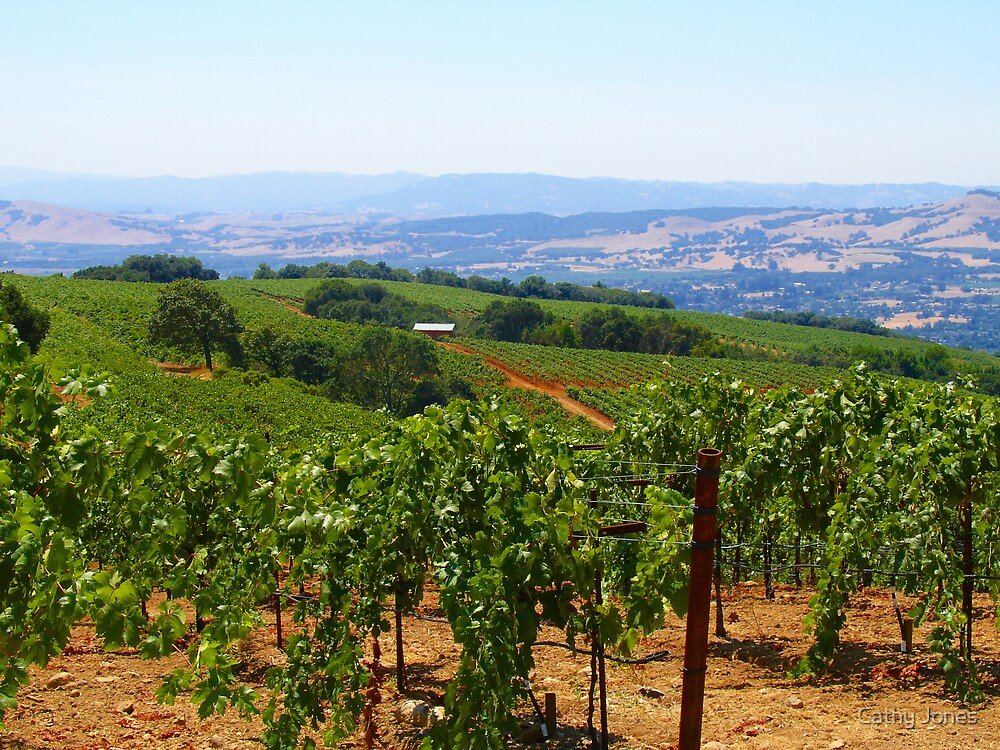 Wine Country by Cathy Jones