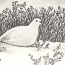 Hidden - Ptarmigan by John Houle