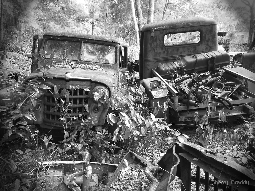 Two Old Trucks by Sherry  Graddy