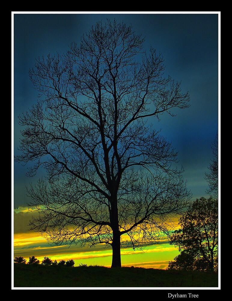 Dyrham Tree by wiseowl2503