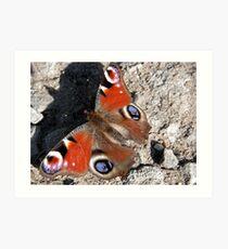 Basking Butterfly Art Print