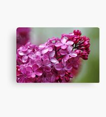 Heavenly Lilacs Canvas Print
