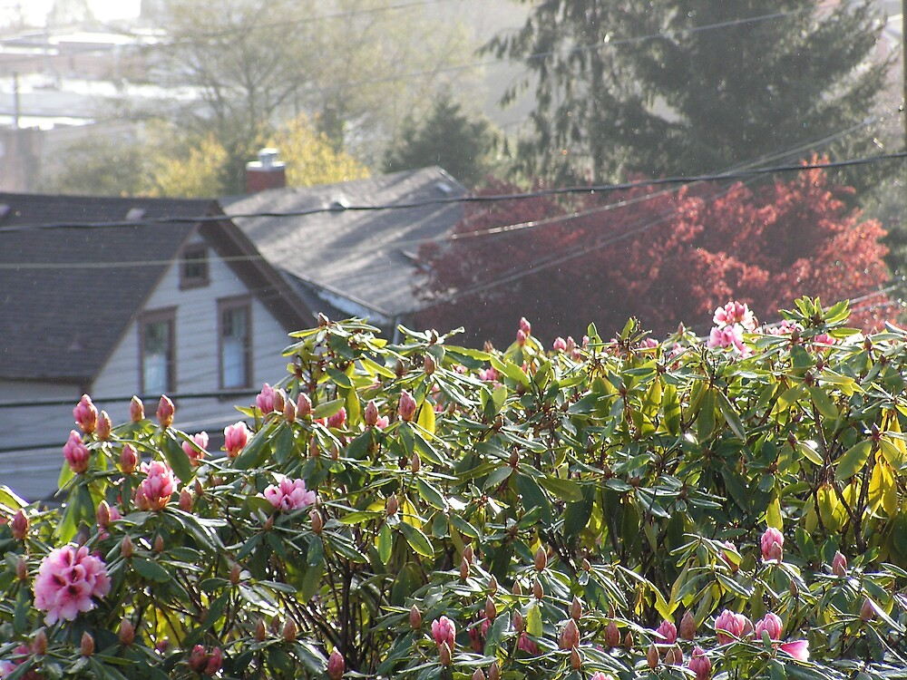 April from the front porch -- Astoria, Oregon by margaretarts