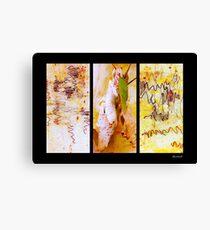 Scribbly Gum Tree Bark Patterns Canvas Print