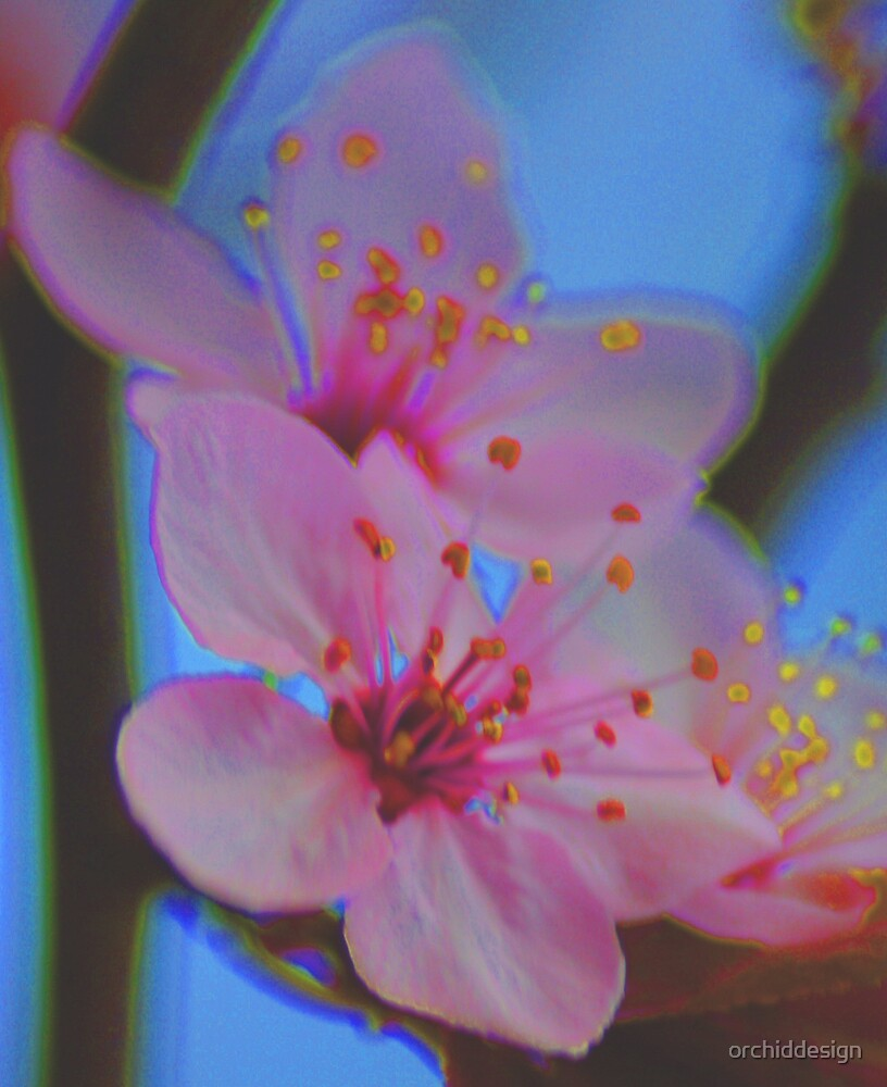 Funky Cherry II by orchiddesign