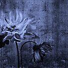 Mono Anemone by Ann Garrett