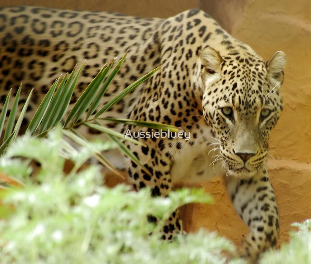 Persian Leopard. by Aussiebluey