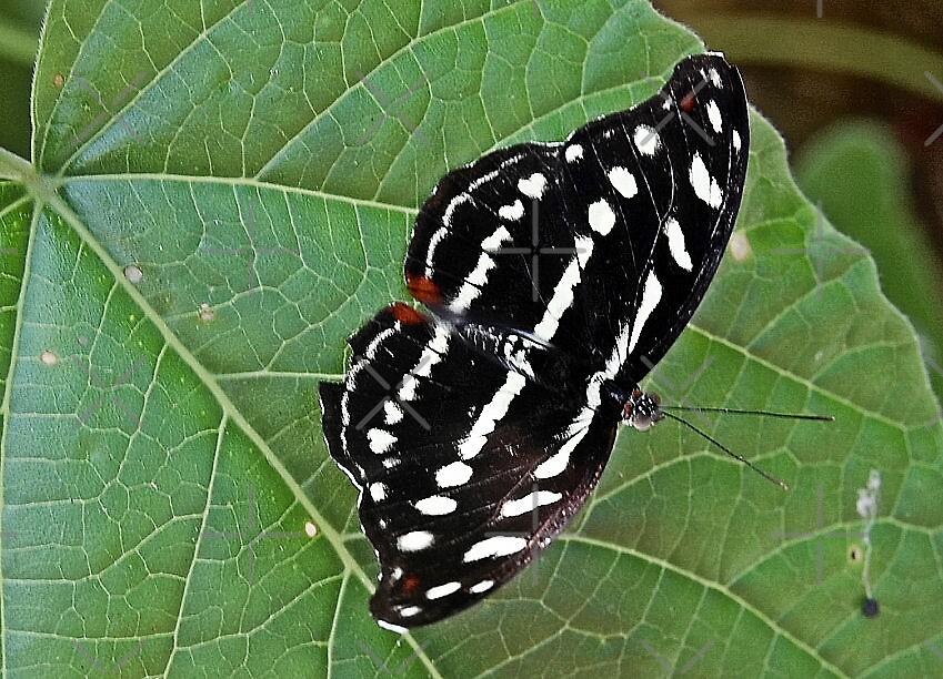 Fly away by nitelite