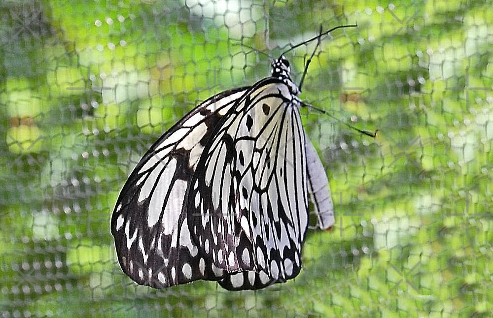 White Flight by nitelite