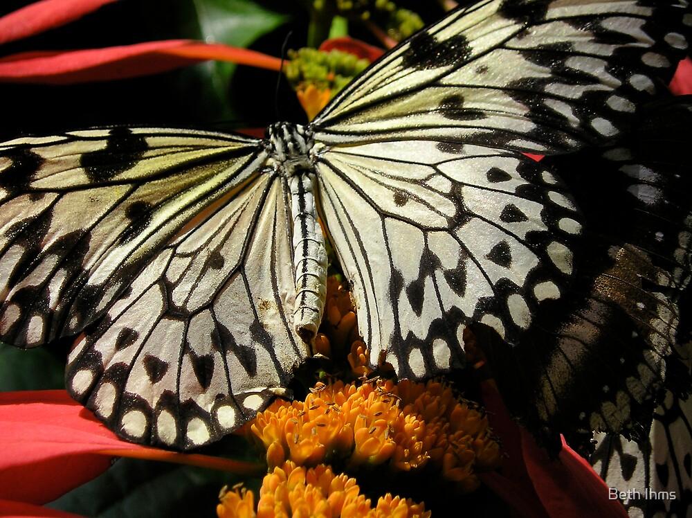 Butterflies II by Beth Ihms
