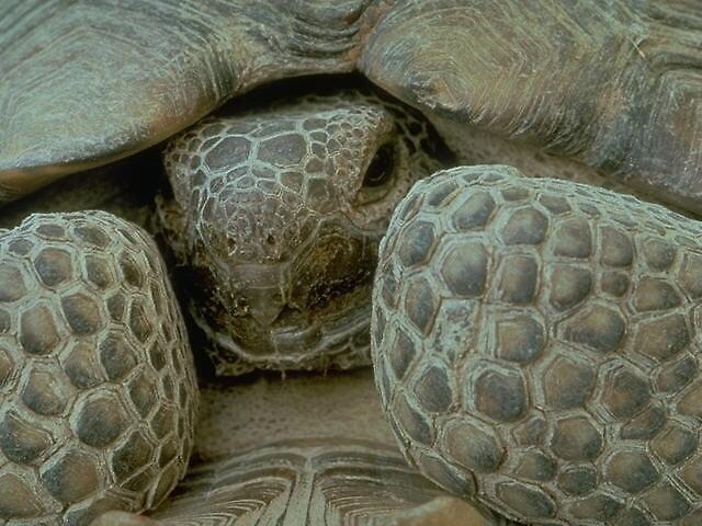 turtle in hiding by DemonKing