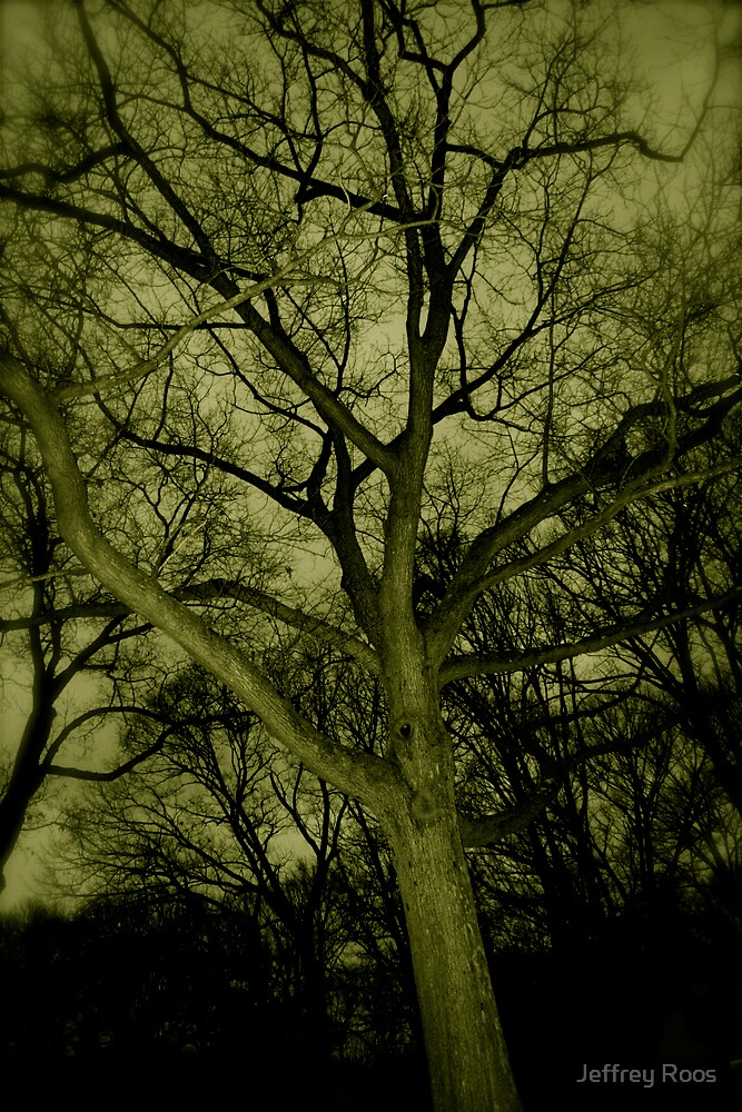 trees 1 by Jeffrey Roos